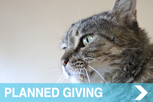 meow co - donate - PLANNED GIVING