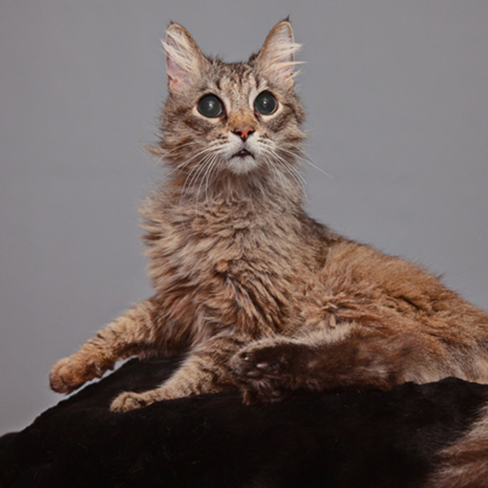 MEOW co - Blind-senior-cat-adoption-