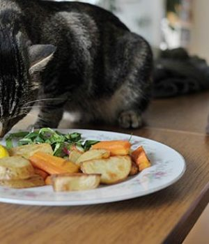 meow co - cat eating